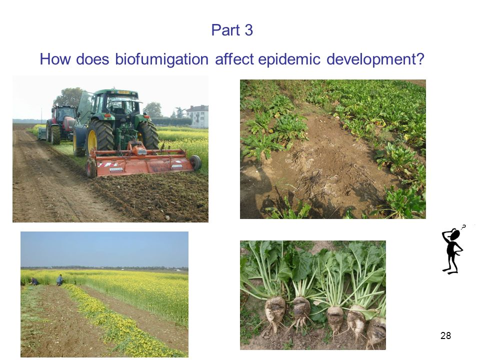 How does biofumigation affect epidemic development