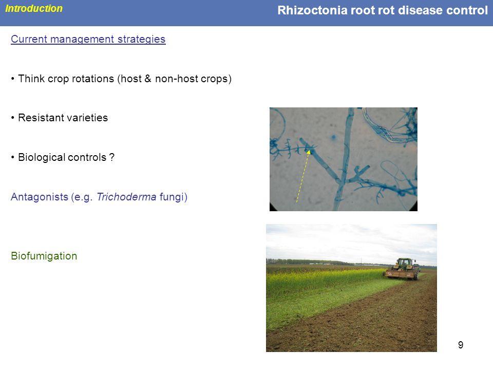 Rhizoctonia root rot disease control