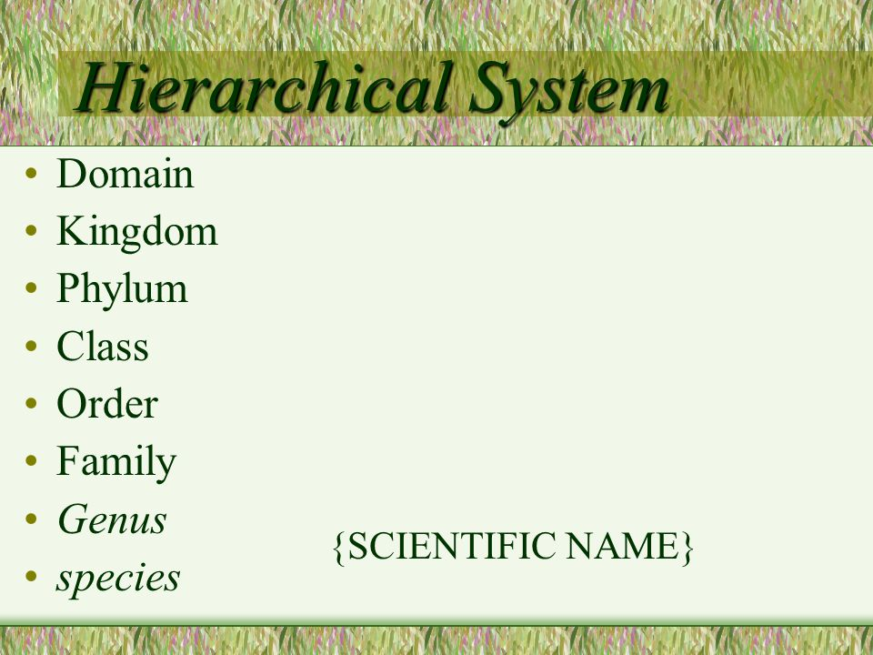 Hierarchical System Domain Kingdom Phylum Class Order Family Genus