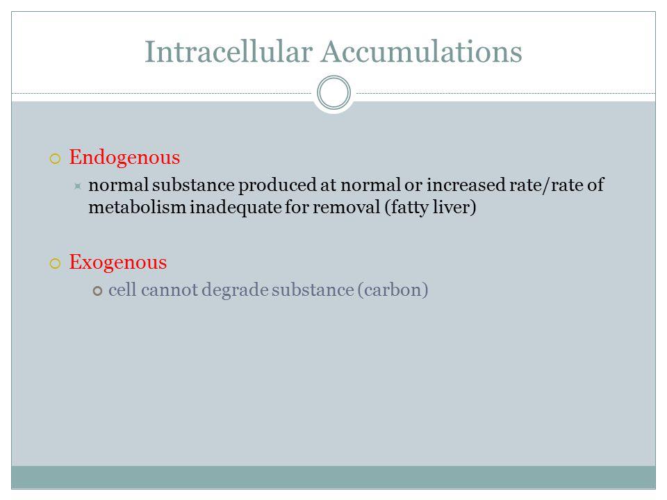 Intracellular Accumulations