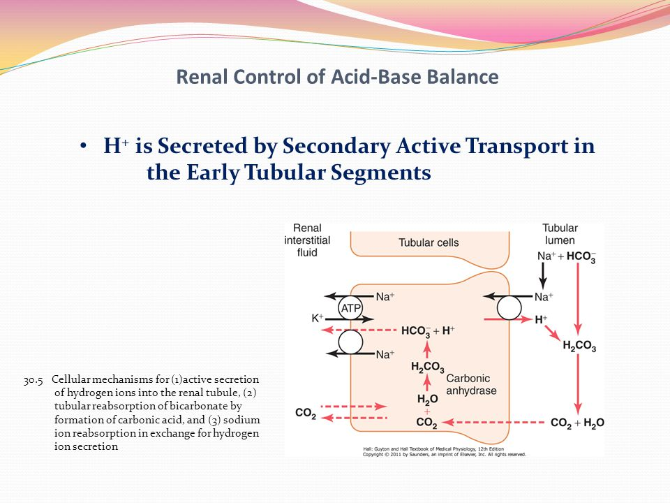 Renal Control of Acid-Base Balance
