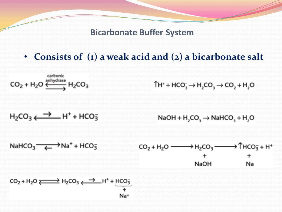 Bicarbonate Buffer System