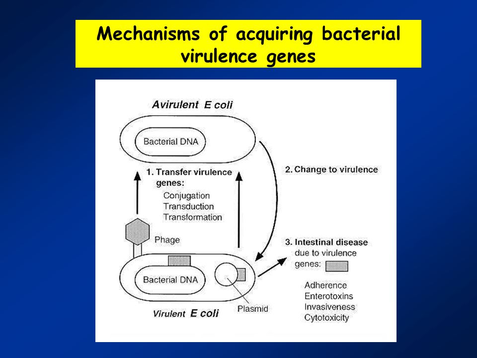 factors of parasitic virulence Family of interrelated parasite virulence factors, and definitively establish the role of lpg itself as a parasite virulence factor.