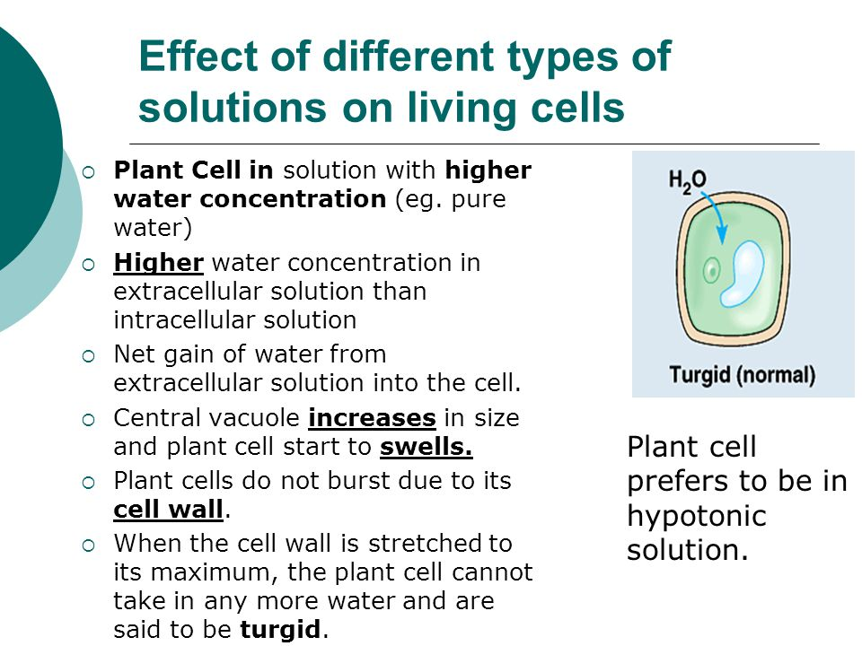 the effect of osmosis on differences Diffusion and osmosis - learn about the difference between diffusion  states the effect of the  is the difference between two concentration solutions at either.