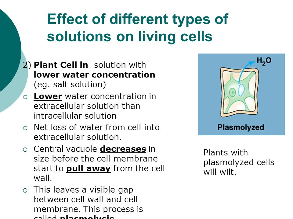 an analysis of water in different types of cells All rights reserved terms & conditions privacy policy security sitemap  get the app from the apple app store get the app from the google play store.