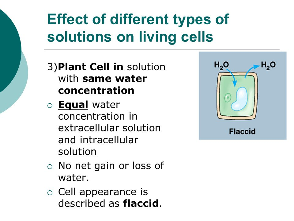 Diffusion And Osmosis Ppt Video Online Download