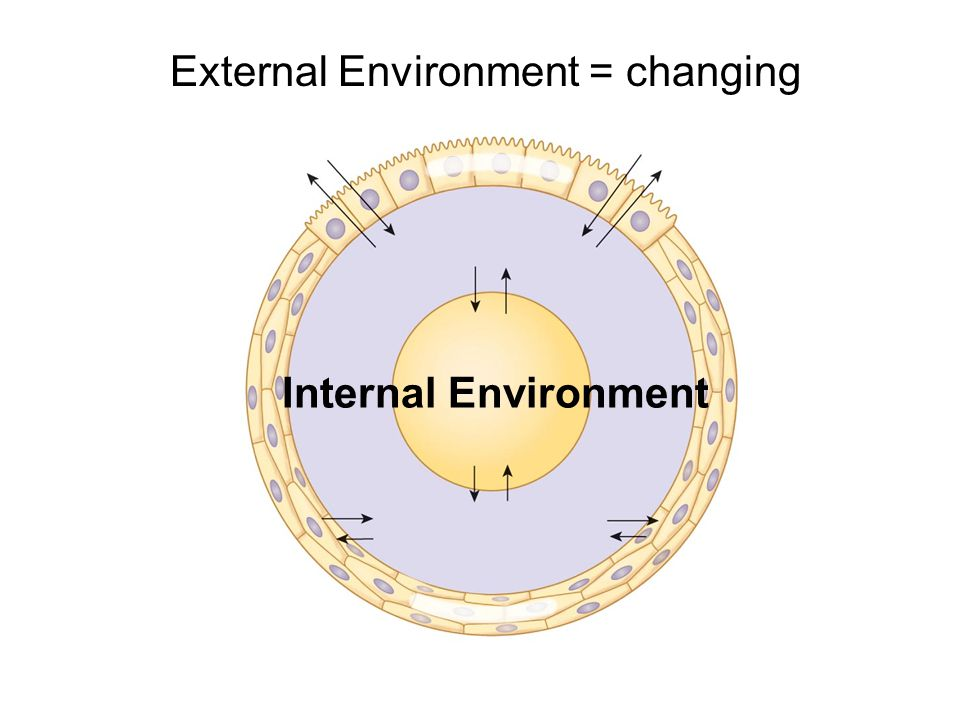 external environment body shop The external environment thomson learning tm the environment and corporate culture learning objectives after studying this chapter, you should be able to: 1.