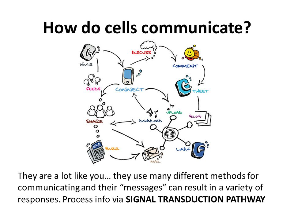ch11 cell communication