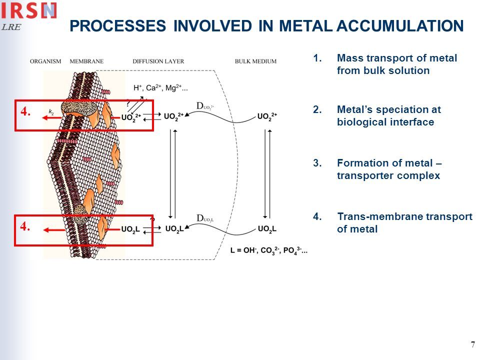 PROCESSES INVOLVED IN METAL ACCUMULATION