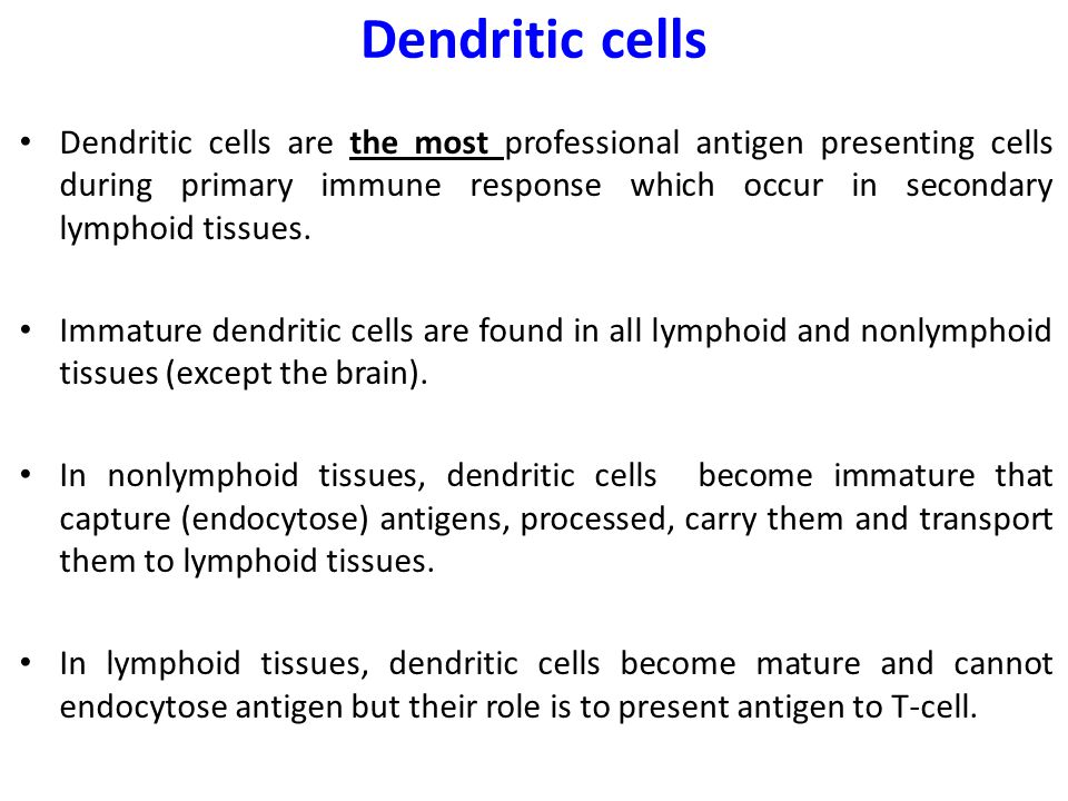 immature dendritic cells - photo #37