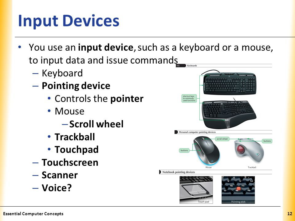Input Devices You use an input device, such as a keyboard or a mouse, to input data and issue commands.