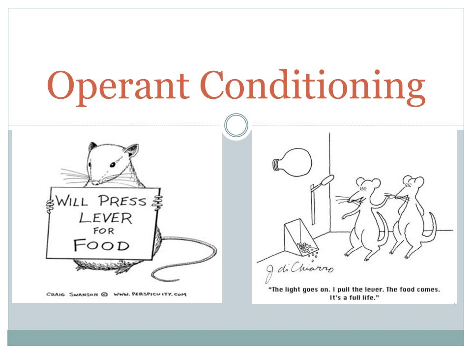 examples of classical conditioning operant conditioning What is operant conditioning combines classical and operant conditioning several real-world examples of operant conditioning have already been mentioned.