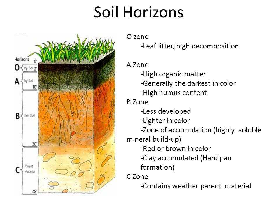 The four components of soil ppt video online download for Four main components of soil