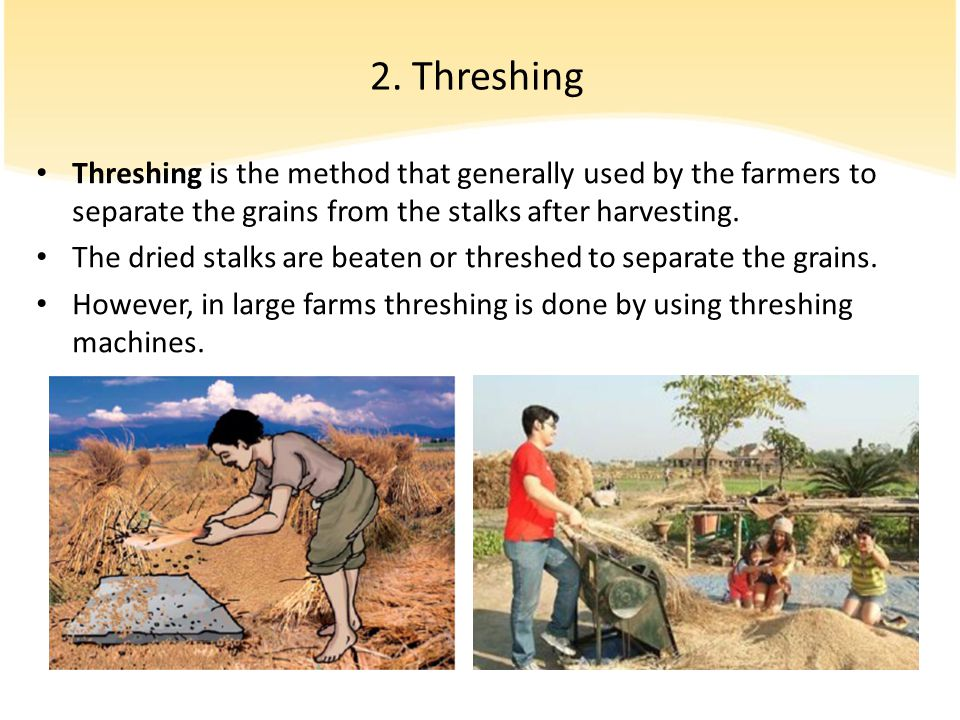 2. Threshing Threshing is the method that generally used by the farmers to separate the grains from the stalks after harvesting.