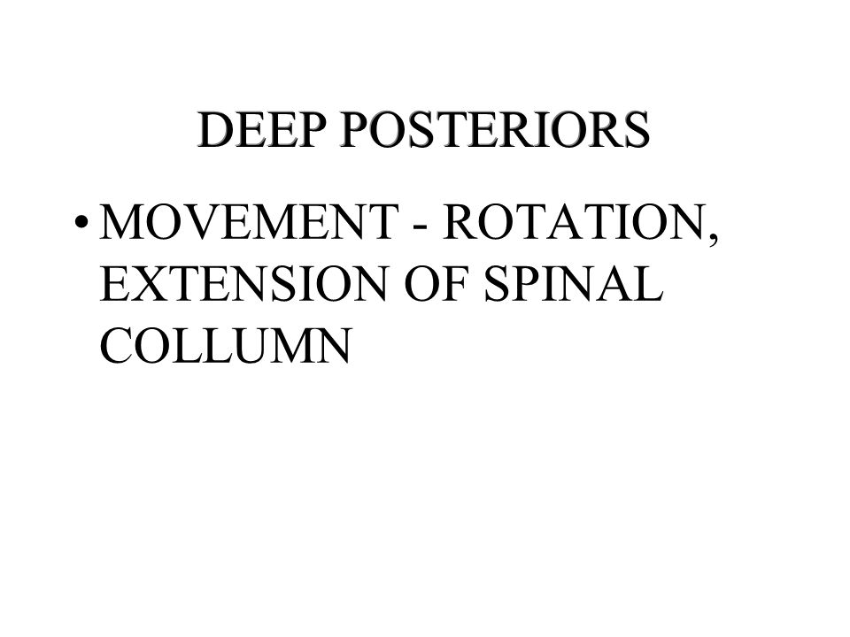 DEEP POSTERIORS MOVEMENT - ROTATION, EXTENSION OF SPINAL COLLUMN