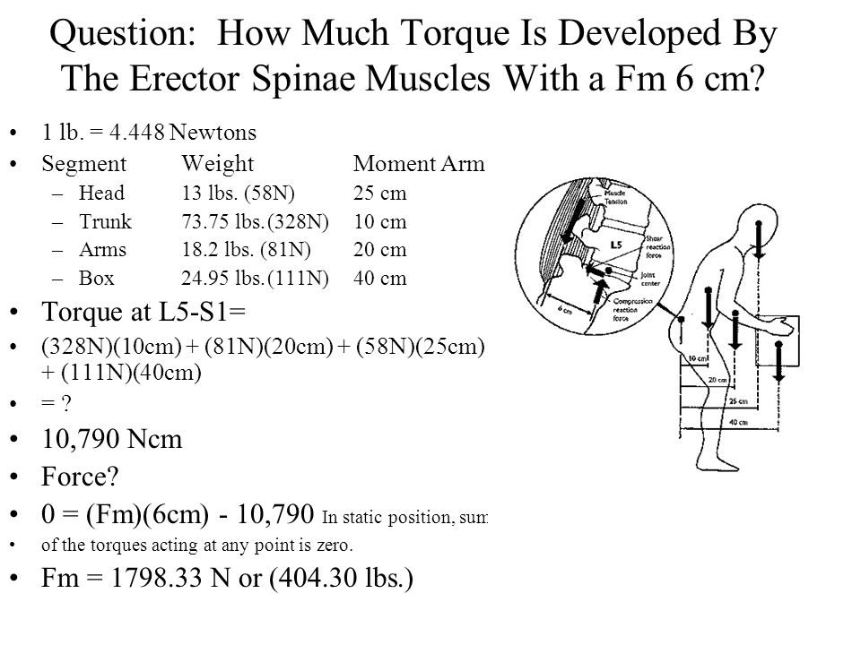 Question: How Much Torque Is Developed By The Erector Spinae Muscles With a Fm 6 cm