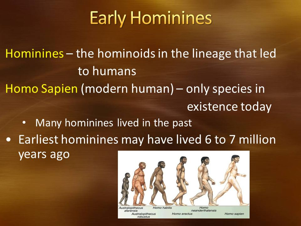 Early Hominines Hominines – the hominoids in the lineage that led