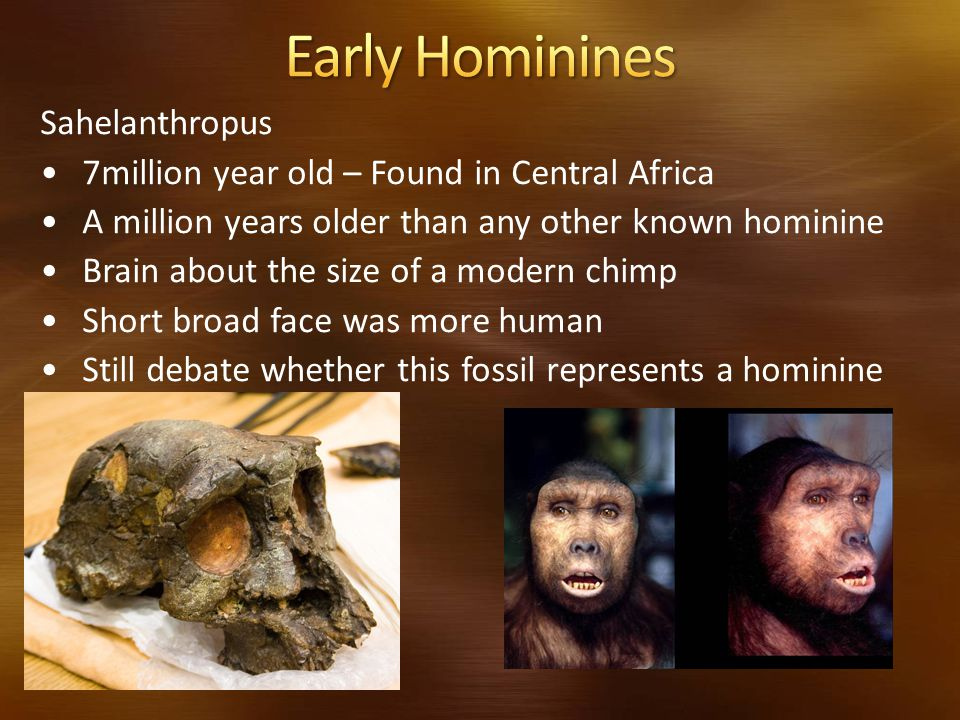 Early Hominines Sahelanthropus