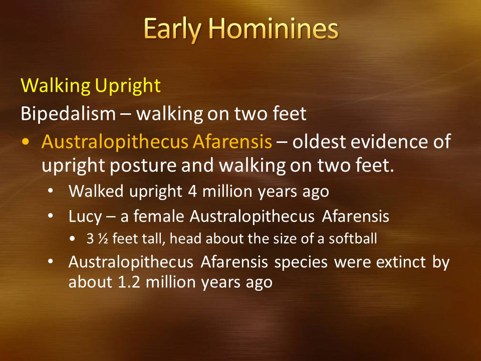 Early Hominines Walking Upright Bipedalism – walking on two feet