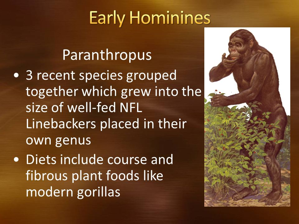 Early Hominines Paranthropus