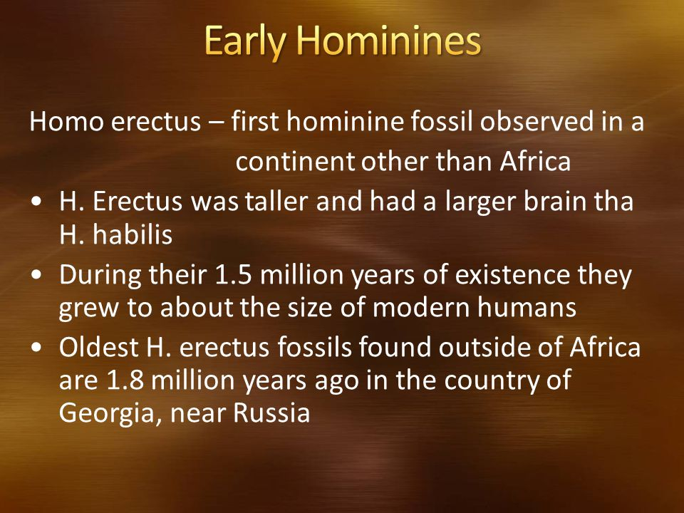 Early Hominines Homo erectus – first hominine fossil observed in a