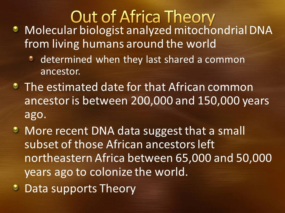 Out of Africa Theory Molecular biologist analyzed mitochondrial DNA from living humans around the world.