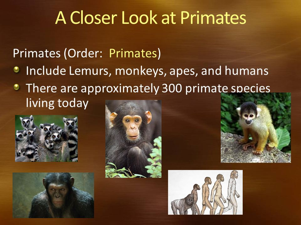 A Closer Look at Primates