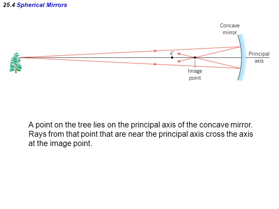 A point on the tree lies on the principal axis of the concave mirror.