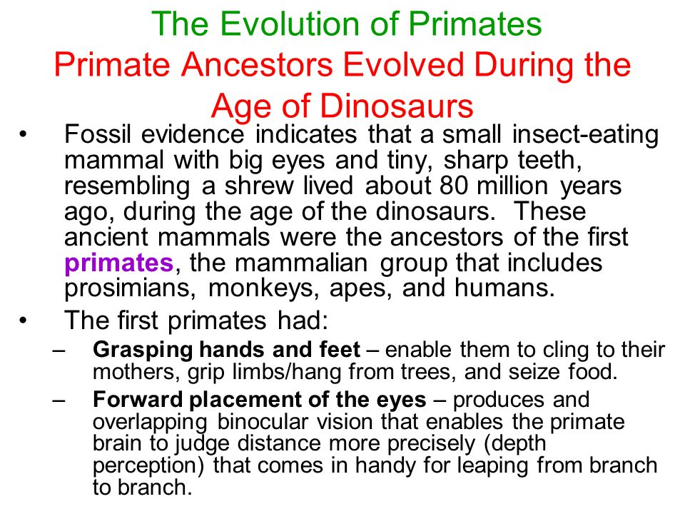 the evolution of primate intelligence Excerpt from term paper : primates are more cognitively advanced than other mammals and that the degree of cognitive awareness and ability grows significantly from prosimians to humans however, researchers still debate which parameters should be used to define and compare intelligence as well as the causal factors leading to this cognitive growth.