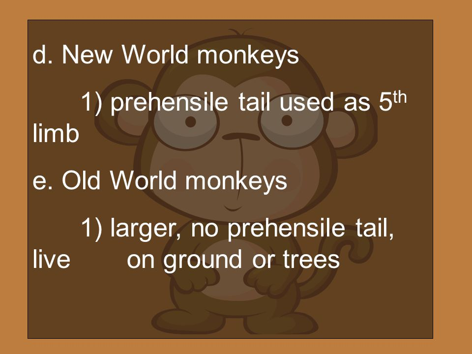 d. New World monkeys 1) prehensile tail used as 5th limb.