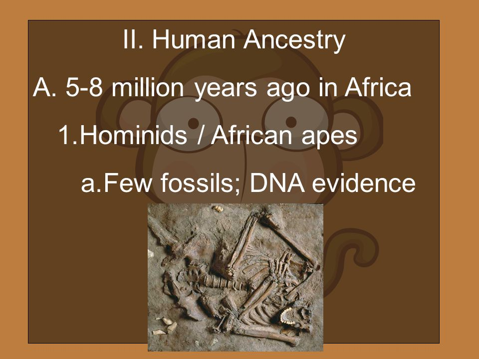 II. Human Ancestry 5-8 million years ago in Africa.