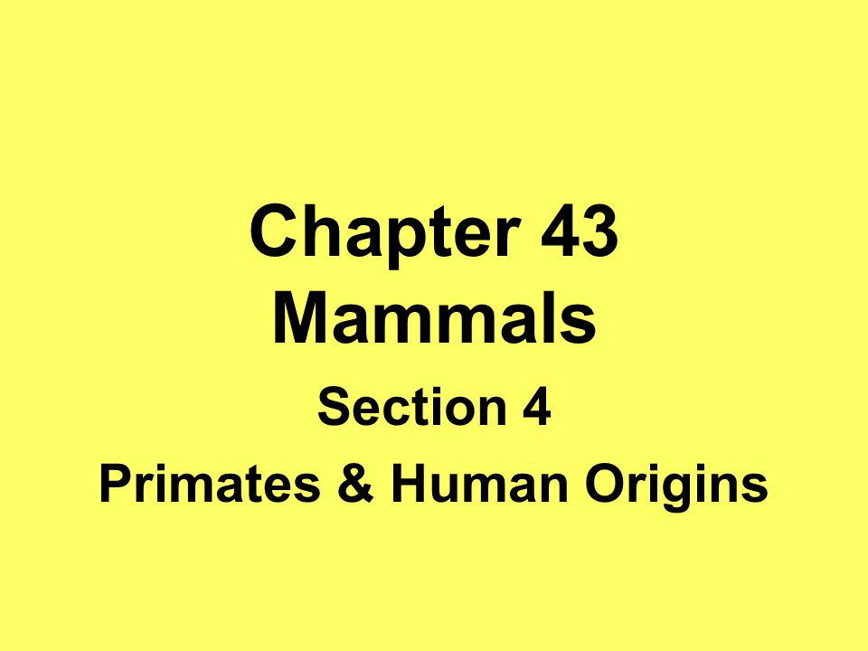 Section 4 Primates & Human Origins