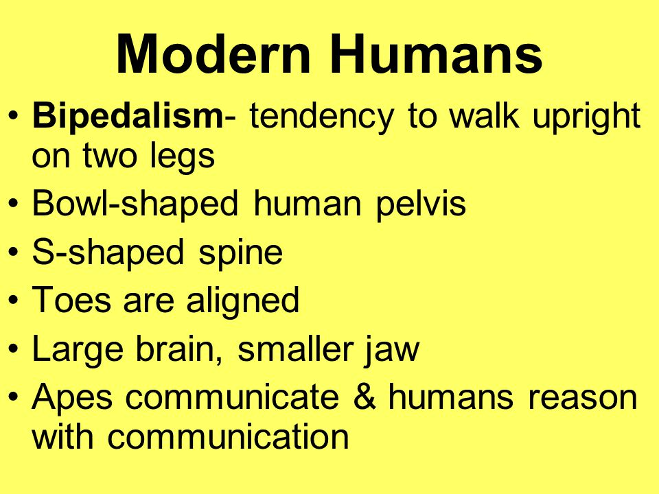 Modern Humans Bipedalism- tendency to walk upright on two legs