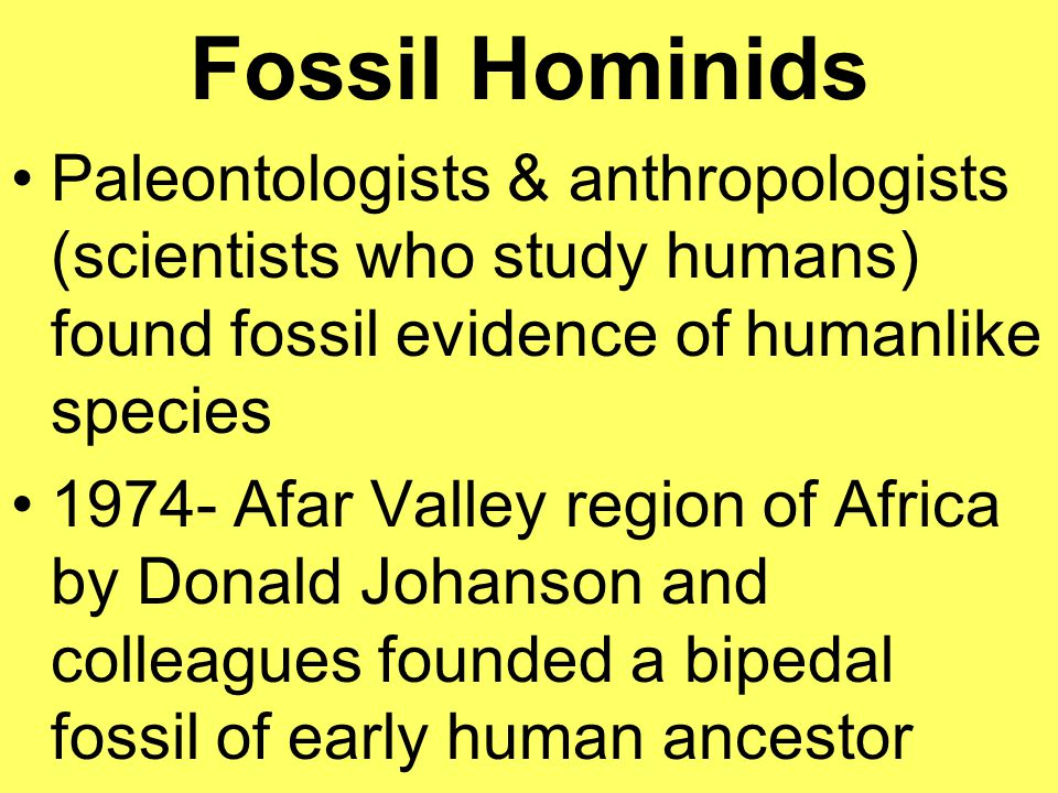 Fossil Hominids Paleontologists & anthropologists (scientists who study humans) found fossil evidence of humanlike species.
