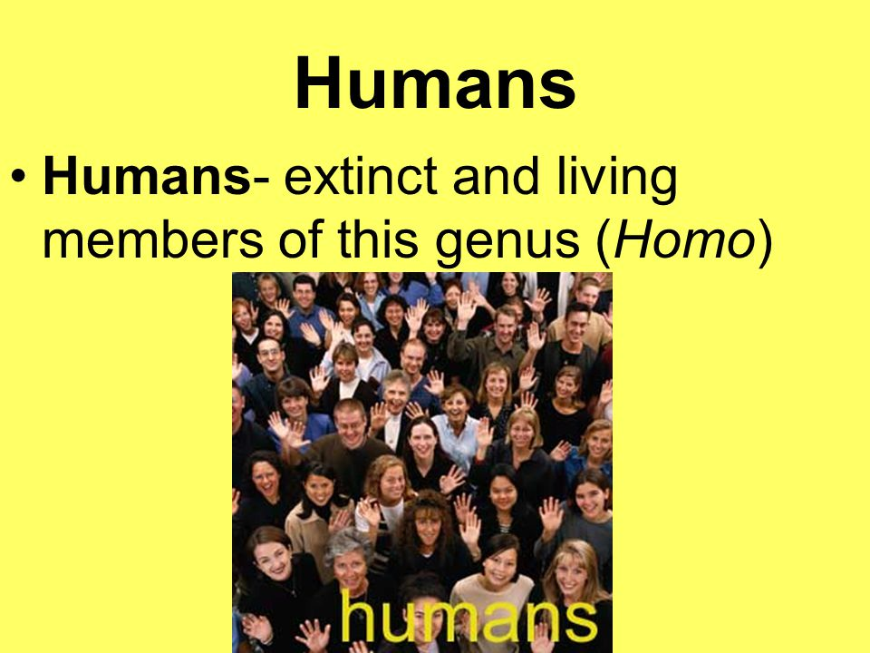 Humans Humans- extinct and living members of this genus (Homo)