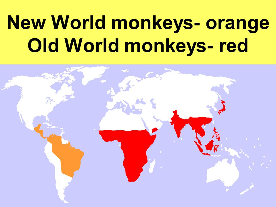 New World monkeys- orange Old World monkeys- red
