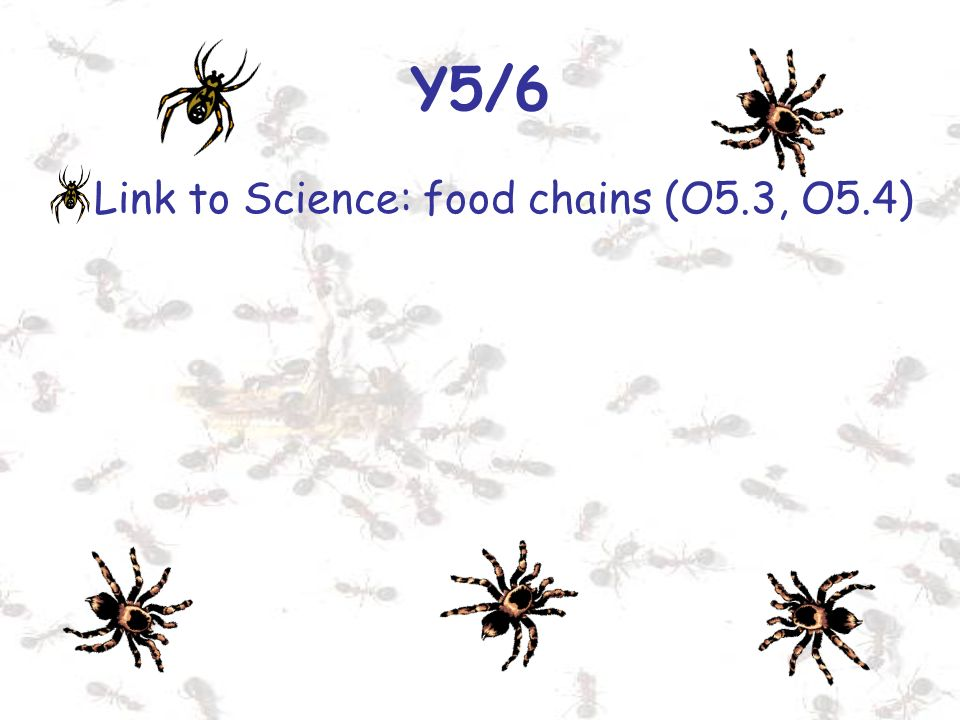 Y5/6 Link to Science: food chains (O5.3, O5.4)