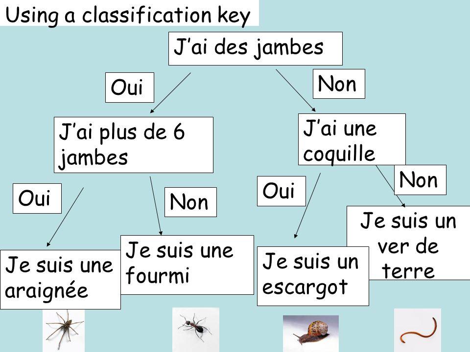 Using a classification key