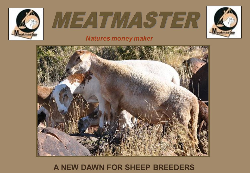 A NEW DAWN FOR SHEEP BREEDERS