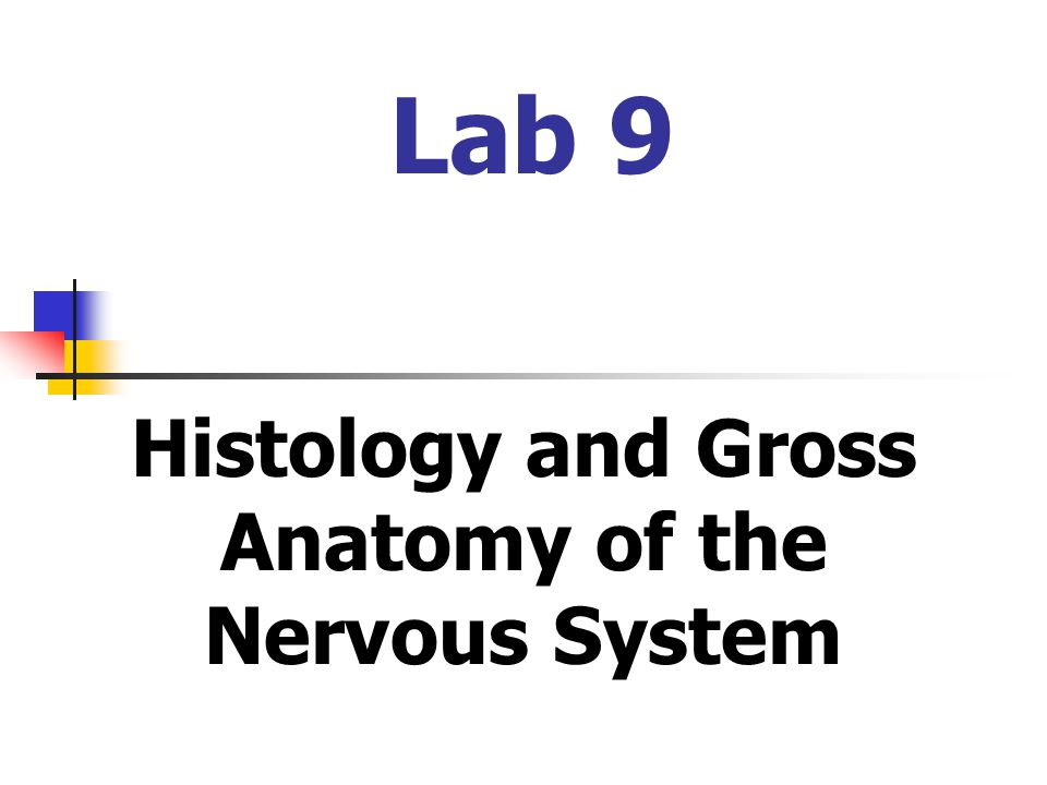 Histology and Gross Anatomy of the Nervous System - ppt video online ...
