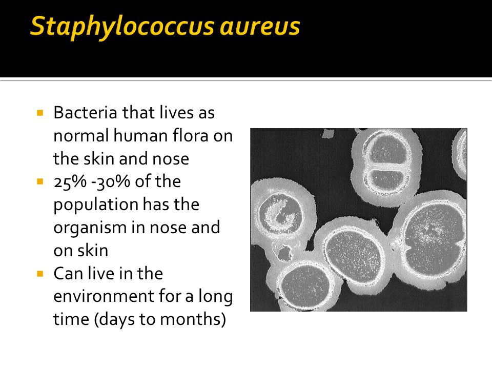 the bacterial disease of methicillin resistant staphylococcus aureus S aureus has long been recognized as one of the most important bacteria that cause disease in infections with methicillin-resistant staphylococcus aureus.