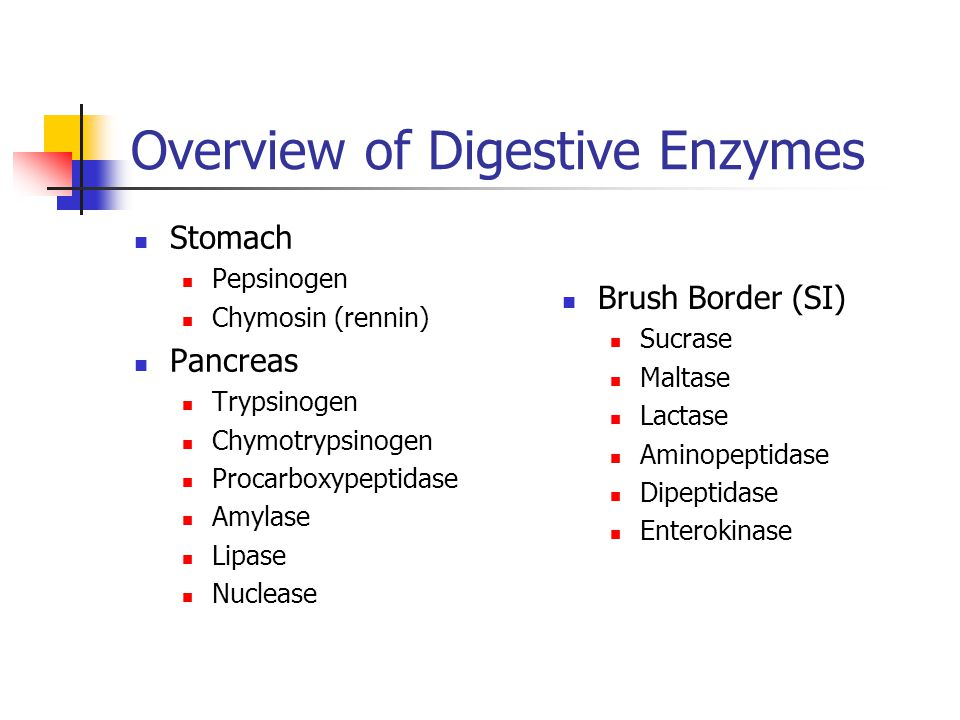 An overview of enzymes