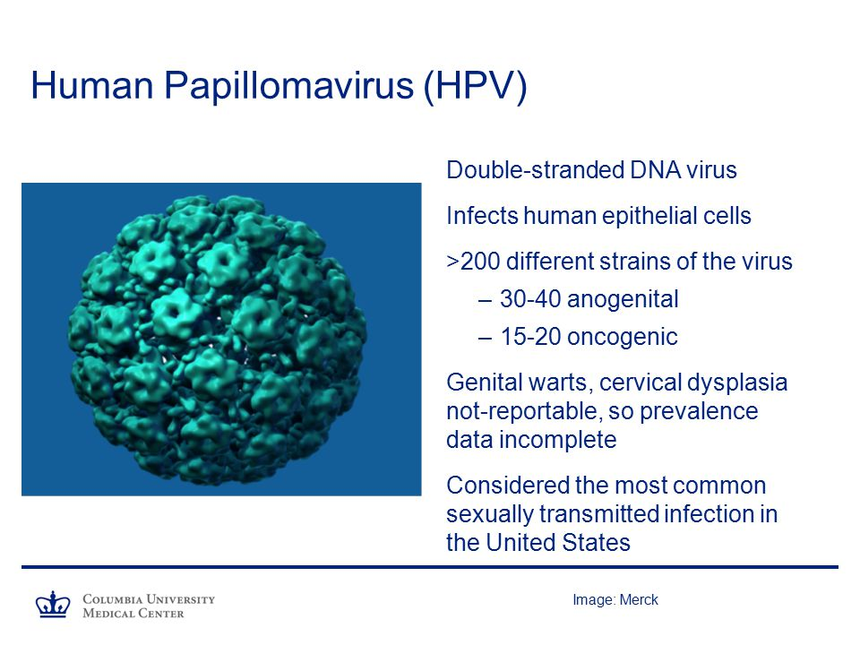 human papillomavirus hpv virus the hpv vaccine a clinical ...
