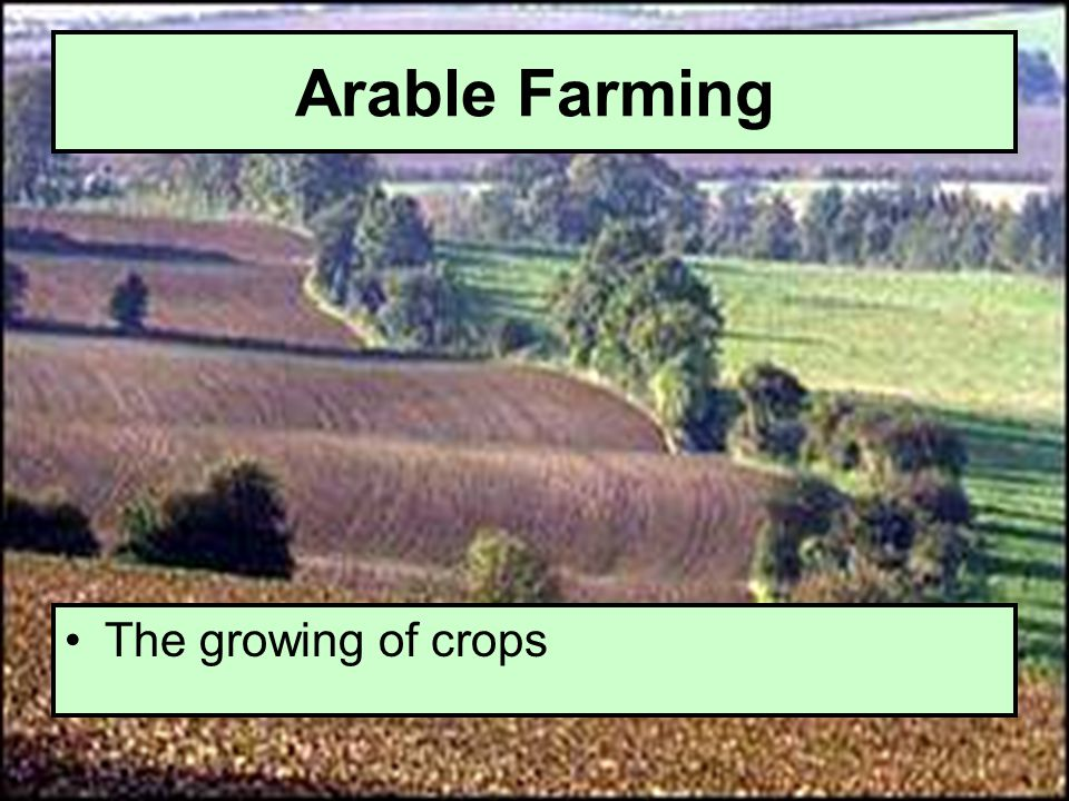 Arable Farming The growing of crops