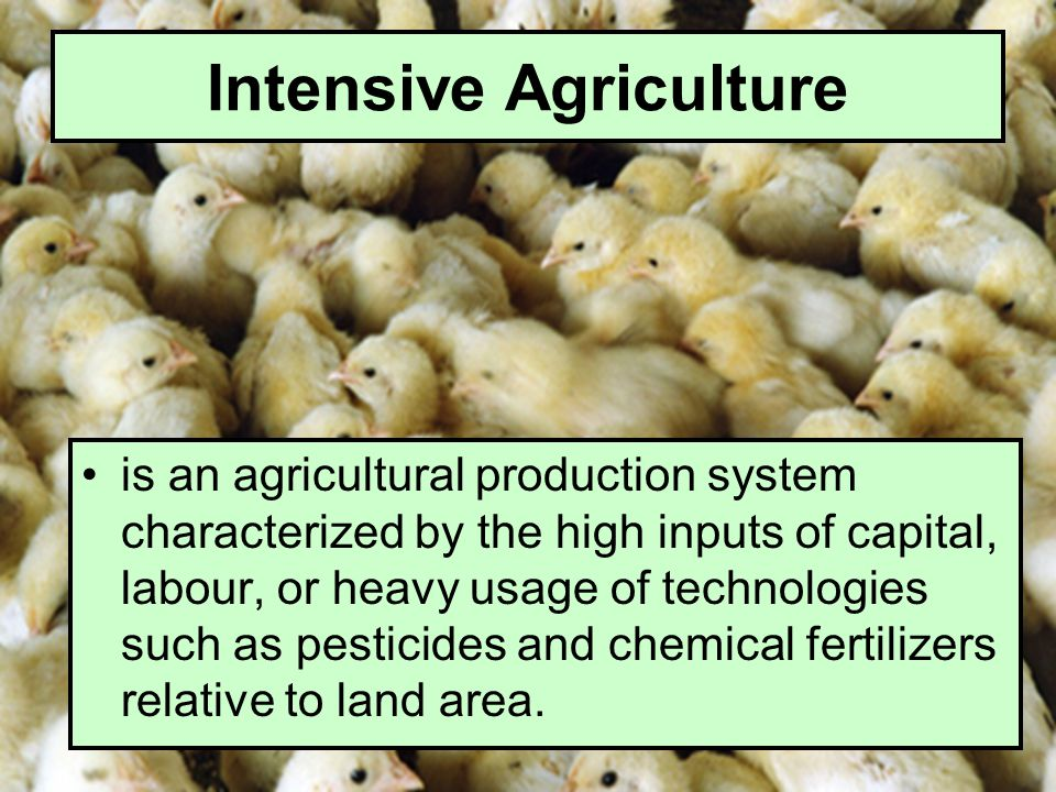 Intensive Agriculture