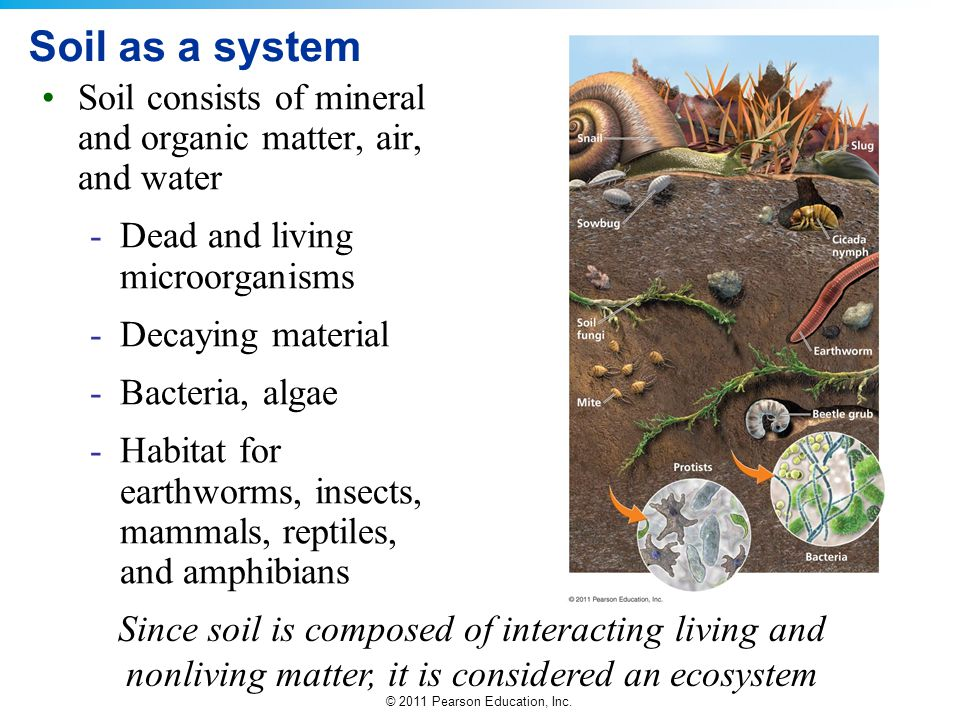 Soil as a system Soil consists of mineral and organic matter, air, and water. Dead and living microorganisms.