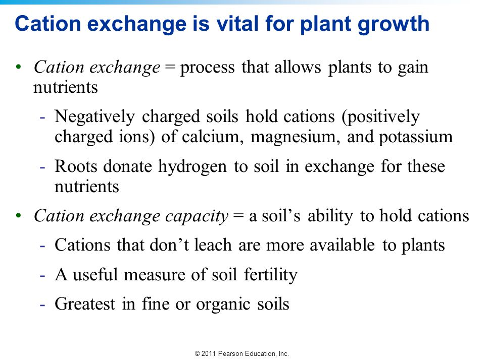 Cation exchange is vital for plant growth