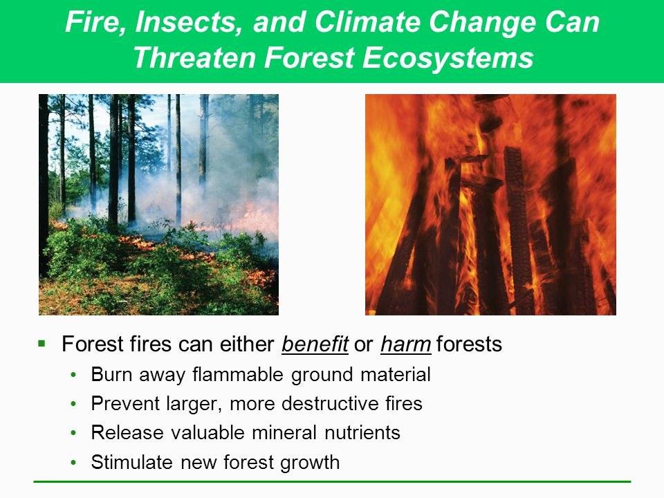 climate forest ecosystems Ecosystems impacts  forest impacts  allowing outbreaks to continue unabated in northern boreal forests climate determines the growth rate of insects .