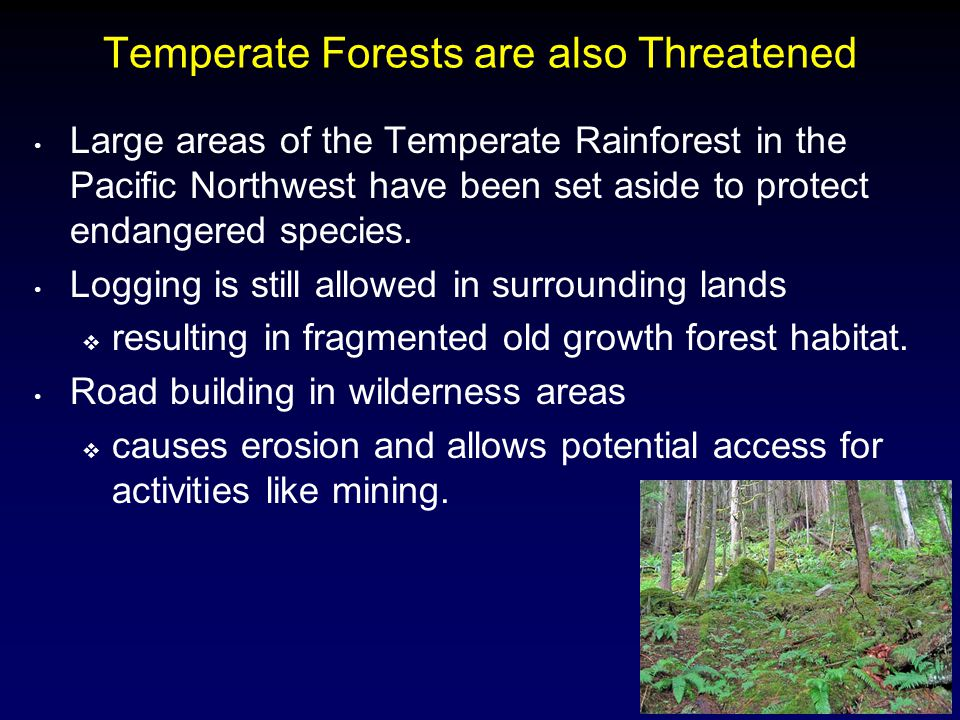 Temperate Forests are also Threatened