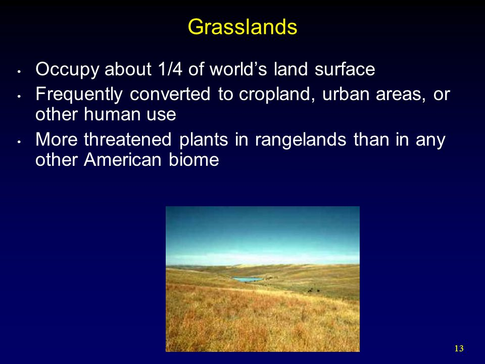 Grasslands Occupy about 1/4 of world's land surface